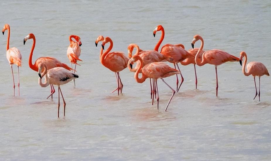 Curacao en Bonaire flamingos